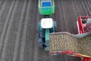 Zmechanizowany zbiór marchwi, ziemniaków, selerów.