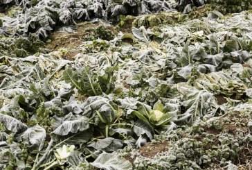 Przymrozki w Europie. Zagrożone uprawy we Włoszech