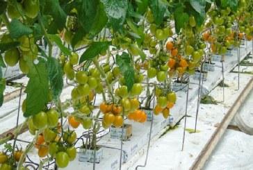 Przygotowanie pożywki, a rozpuszczalność nawozów