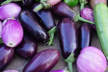 Rekordowy import warzyw w UE