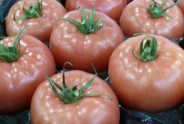 Rynek pomidora w Rosji: pełna zgodność co do rozbieżności