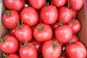 Pomidory do tuneli i szklarni