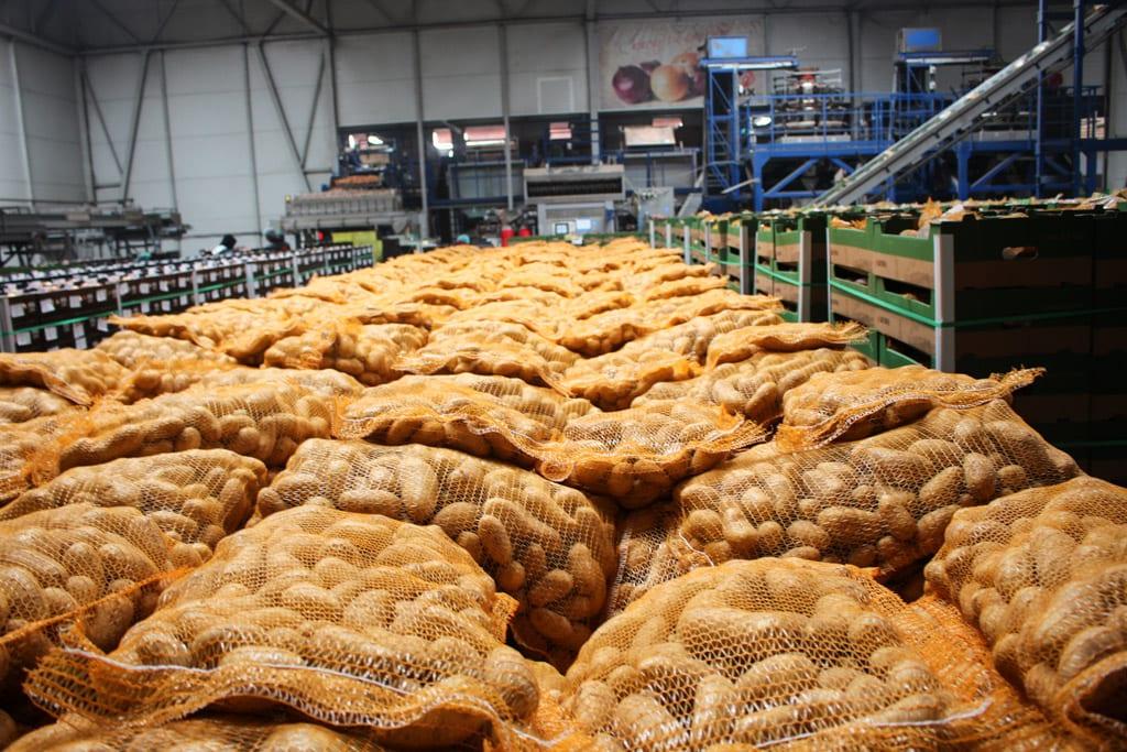Ziemniaki z serca Wielkopolski