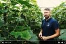 Dwa ASY w rękawie – uprawa ogórków Seminis