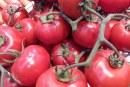 Produkcja pomidorów we Francji. Gałązkowych przybywa