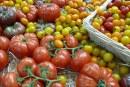 Azerbejdżan. Dynamicznie rośnie wartość eksportu warzyw
