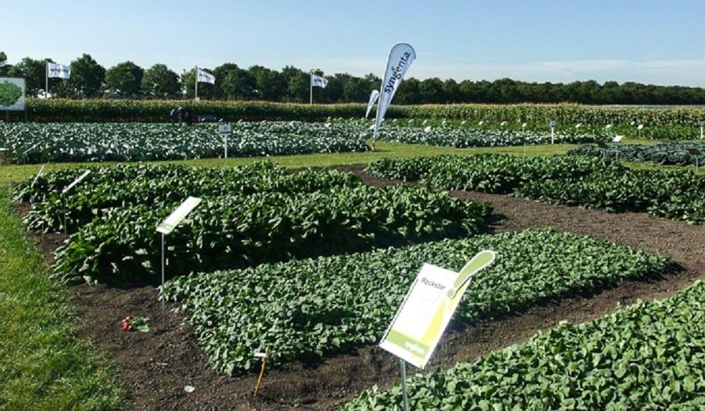 Jubileusz 150-lecia powstania działu warzyw Syngenta