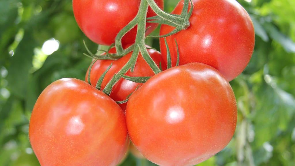 W Unii coraz więcej warzyw z Maroka, Egiptu i Turcji