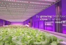 Oświetlenie LED w uprawach warzyw. City Farms