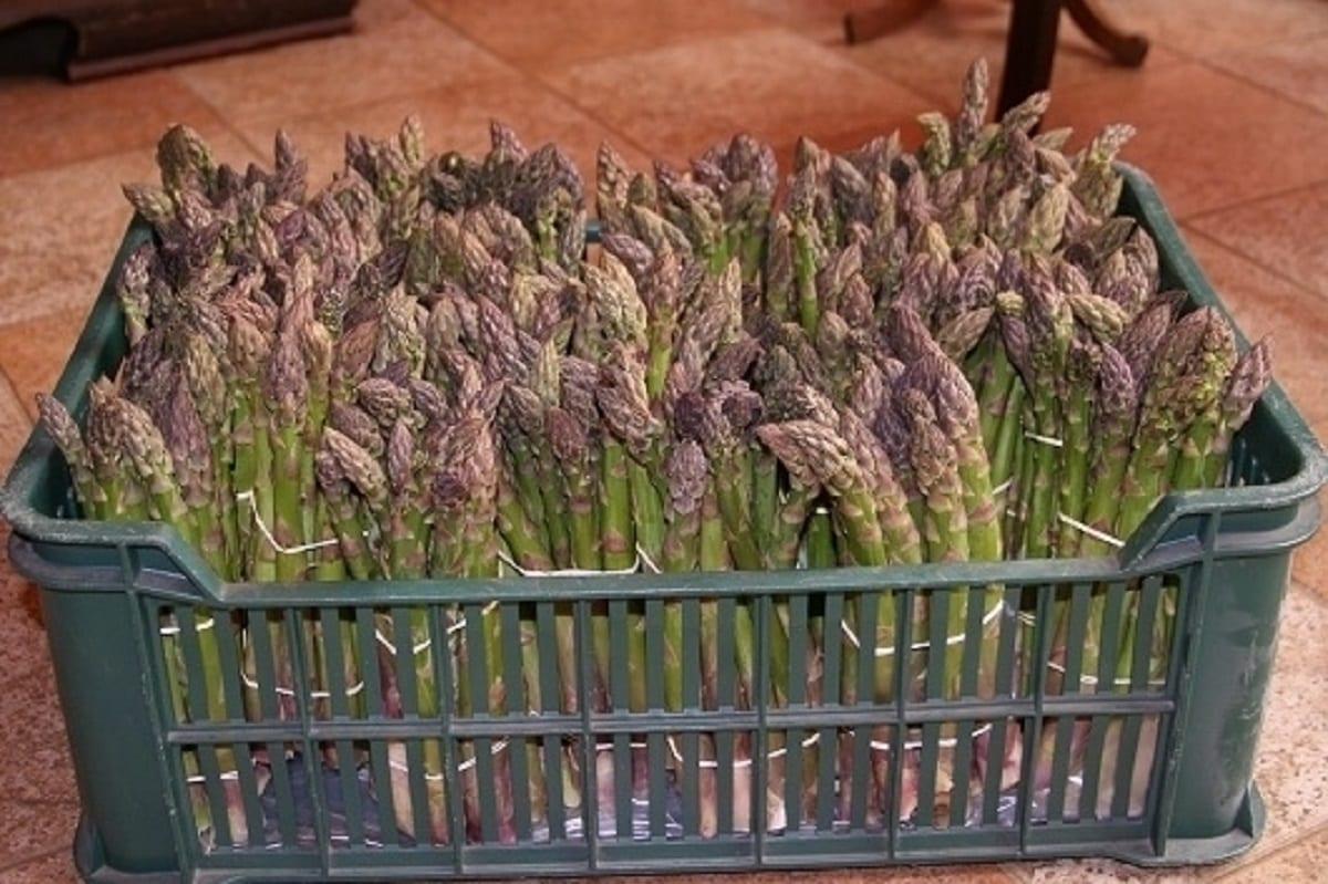 W Broniszach sezon warzyw nowalijkowych w pełni
