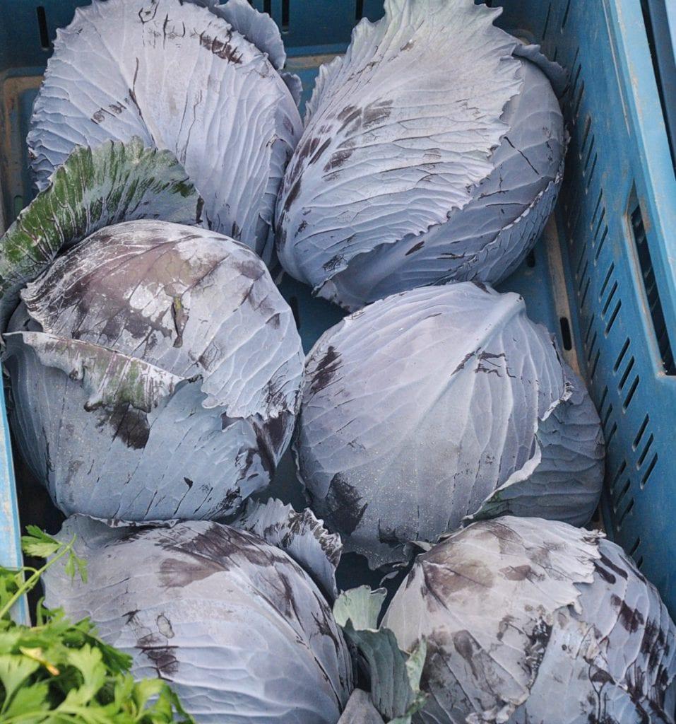 Przedświąteczne ceny warzyw w Broniszach