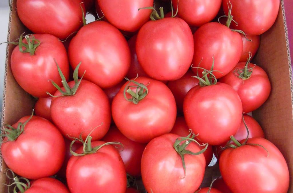 Rok wysokich cen pomidorów w Europie