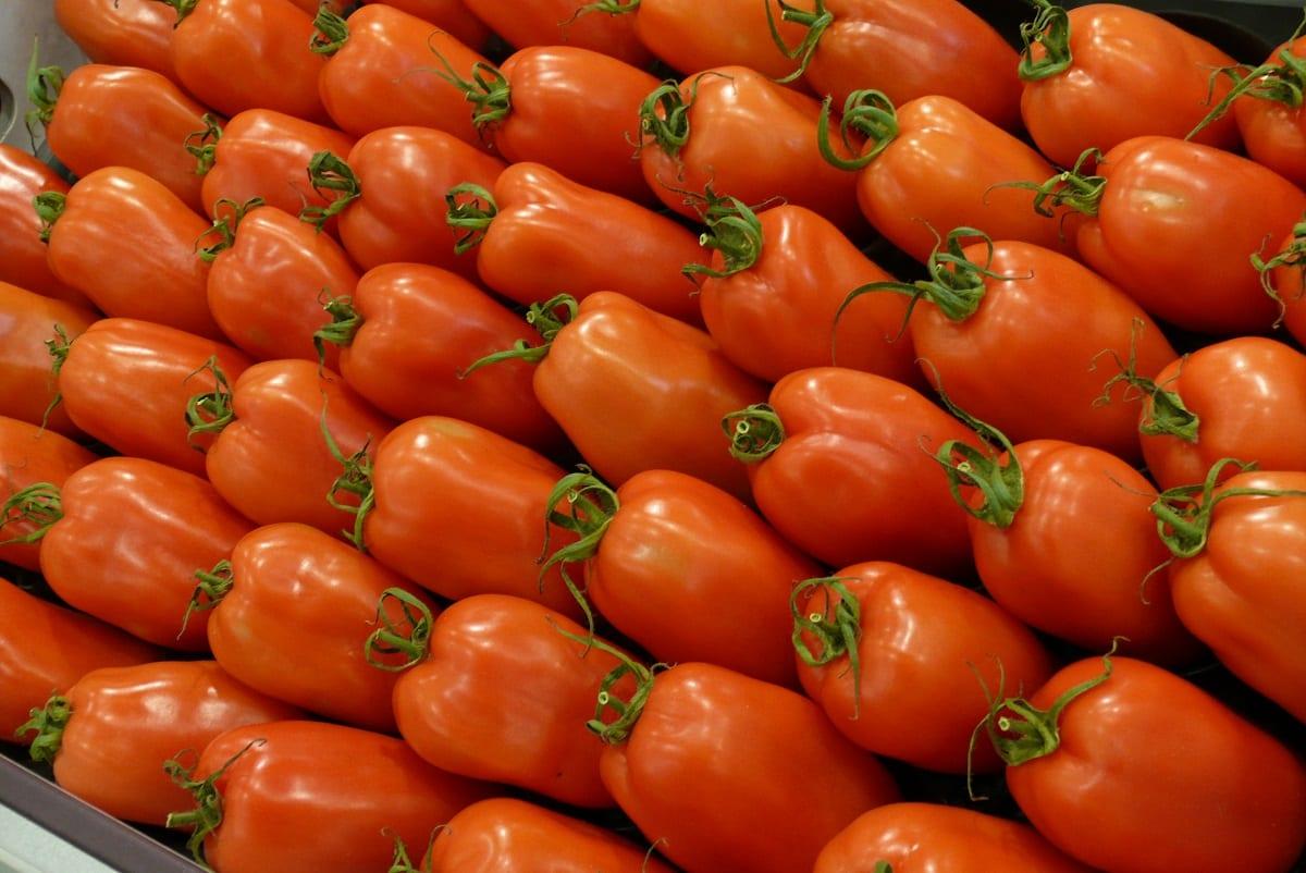 Pomidory i ziemniaki głównymi produktami importowanymi do UE