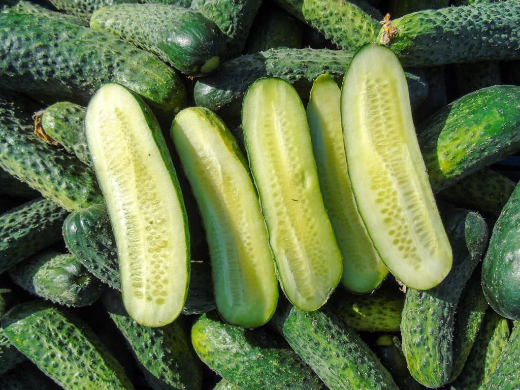 Gruntowe warzywa opóźnione