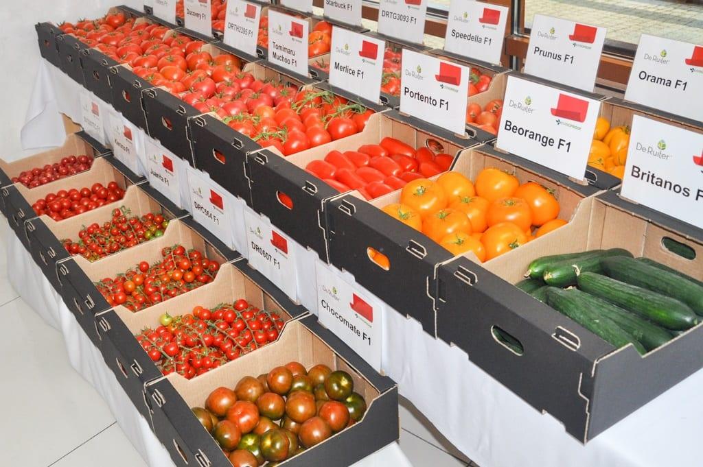 O pomidorach w Łaszkowie