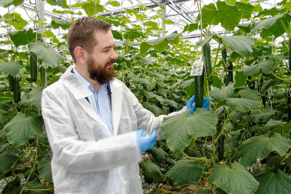 Preparaty biologiczne w uprawie ogórka
