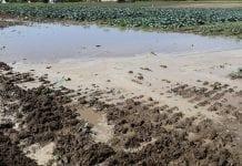 Pogoda w 2017 r. Wyzwania dla produkcji ogrodniczej