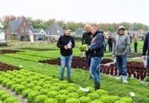Warzywnicze pokazy w Holandii