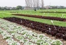 Parlament Europejski za produkcją organiczną