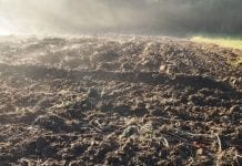 Biologiczna dezynfekcja podłoży. Nowy środek przetestowany