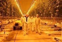 Szklarnie w Holandii – mniej producentów, większa produkcja
