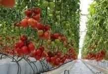 Copa i Cogeca apelują o wsparcie dla organizacji producentów owoców i warzyw