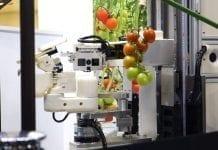 Robot Panasonic – zbiór pomidorów