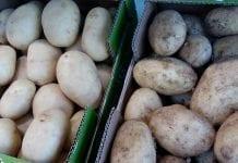 Ceny ukraińskich ziemniaków