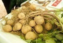 XVII Dzień Ziemniaka w Żelaznej. Fotorelacja.