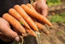BASF finalizuje przejęcie działu nasion warzyw od firmy Bayer