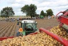 Chobienice ostoją dla ziemniaczanej Agro Akademii