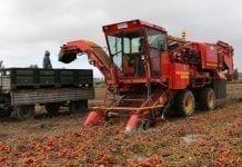 Kombajnowy zbiór pomidorów