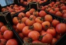 Lepiej zarabia się na eksporcie pomidorów