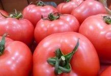 Import eksport pomidorów na Ukrainie