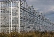 Warzywa pod osłonami w Rosji