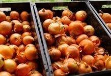Holandia: Gorąco na rynku cebuli