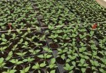Intermag z ofertą dla producentów warzyw pod osłonami