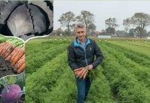 Bejo Zaden – Katalog odmian warzyw 2019-2020