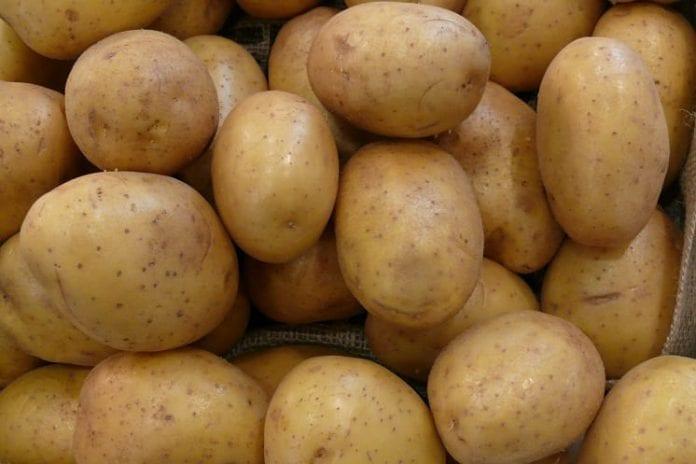 Niższe zbiory ziemniaków w W. Brytanii