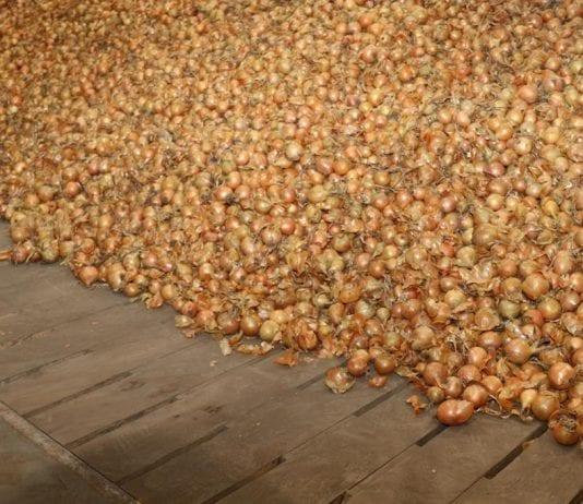 Rynek cebuli w Europie Wschodniej i Azji Środkowej