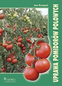 Uprawa pomidorów polowych