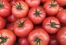 Seminarium o pomidorach i ogórkach