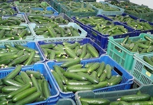 Krajowe warzywa gruntowe coraz droższe. Pierwsze nowalijki