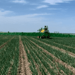Komunikat warzywniczy – tydzień 20. (13.05-19.05) – Agro Smart Lab