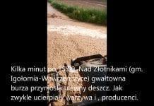 Podtopione gospodarstwa, zalane pola. Nawałnica nie oszczędza producentów warzyw. FILM