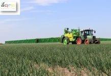 Zagrożenie chorobami i szkodnikami w uprawie warzyw w 21. tygodniu (20.05-26.05)