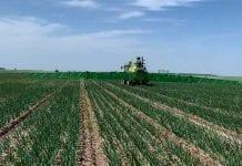 Zagrożenie chorobami i szkodnikami w uprawie warzyw w 23 tygodniu roku