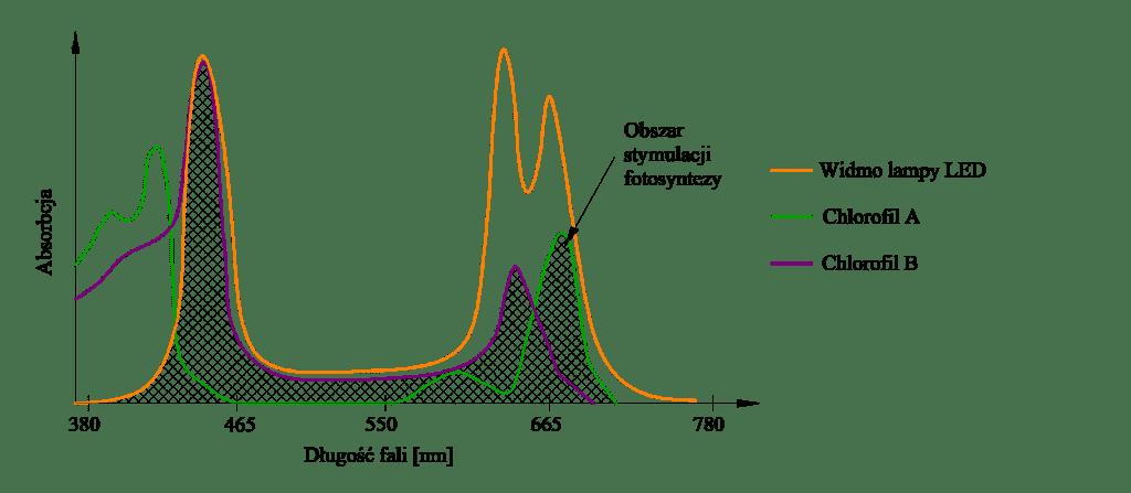 Rysunek 2. Widmo fotosyntezy roślin (Chlorofil A, Chlorofil B) oraz widmo promieniowania szklarniowych opraw LED