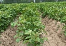 Korekty w strukturze upraw
