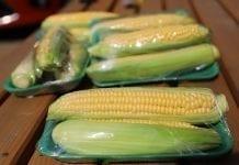 Kukurydza cukrowa już na krajowym rynku